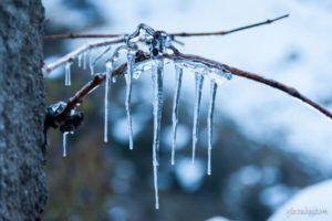 Araña de hielo