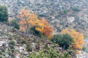 Colores de otoño I
