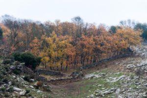 Colores de otoño II