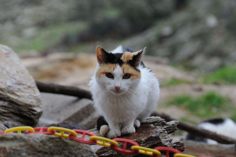 Gato I