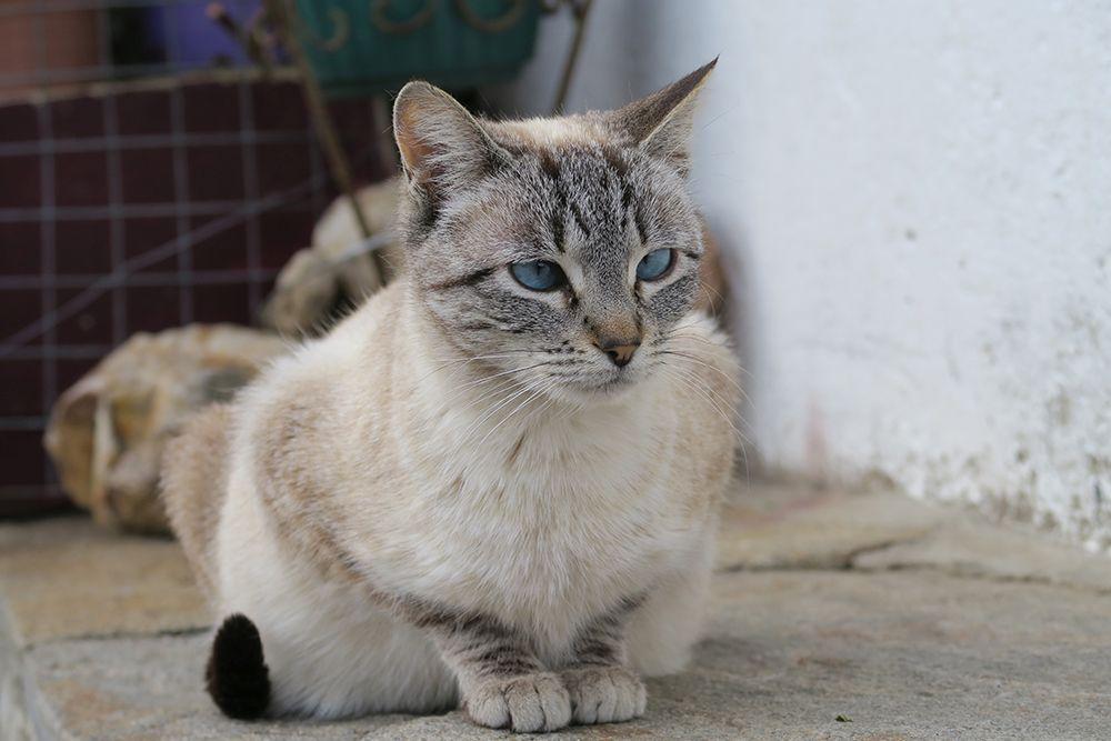 Gato X
