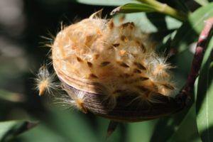 Nido de semillas
