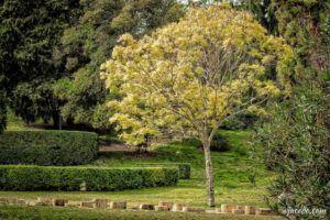 Rincones del Berro en otoño (II)