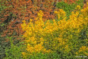 Rincones del Berro en otoño (IV)